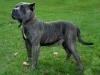 addestramento-cani-3