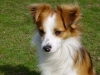 addestramento-cani-4