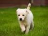 addestramento-cani-5