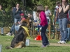 addestramento-cani-open-day-177