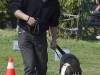 addestramento-cani-open-day-200