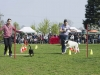 addestramento-cani-open-day-105