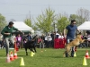 addestramento-cani-open-day-112