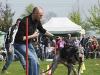 addestramento-cani-open-day-118
