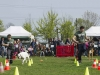 addestramento-cani-open-day-121