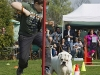 addestramento-cani-open-day-122