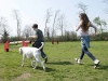 addestramento-cani-open-day-2012-14