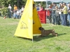addestramento-cani-open-day-2012-26
