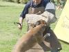 addestramento-cani-open-day-2012-29