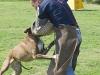 addestramento-cani-open-day-2012-30