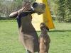 addestramento-cani-open-day-2012-31