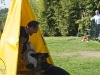 addestramento-cani-open-day-2012-38