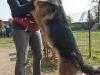 addestramento-cani-open-day-2012-4