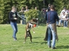 addestramento-cani-open-day-2012-43