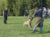 addestramento-cani-open-day-2012-50