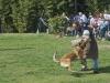 addestramento-cani-open-day-2012-51