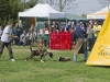 addestramento-cani-open-day-2012-55