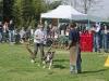 addestramento-cani-open-day-2012-56