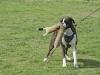 addestramento-cani-open-day-2012-58