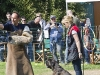 addestramento-cani-open-day-2012-65
