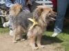 addestramento-cani-open-day-2012-7
