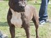 addestramento-cani-open-day-2012-9