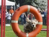 addestramento-cani-open-day-69