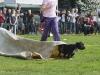 addestramento-cani-open-day-94