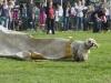 addestramento-cani-open-day-95