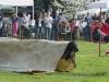 addestramento-cani-open-day-98
