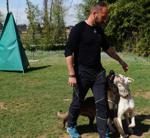 addestramento cani lombardia