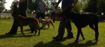 addestramento cani lombardia 5