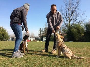 addestramento cani milano lombardia