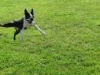 addestramento-cani-10