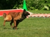 addestramento-cani-6