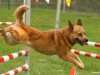 addestramento-cani-7