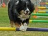 addestramento-cani-8