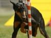 addestramento-cani-9