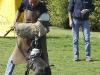 addestramento-cani-open-day-204
