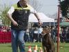 addestramento-cani-open-day-104
