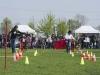 addestramento-cani-open-day-106