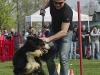 addestramento-cani-open-day-131