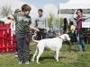 addestramento-cani-open-day-2012-13