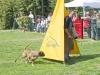 addestramento-cani-open-day-2012-24