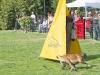 addestramento-cani-open-day-2012-25