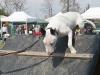 addestramento-cani-open-day-2012-34