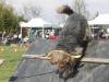 addestramento-cani-open-day-2012-36