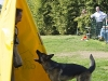 addestramento-cani-open-day-2012-37