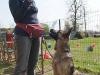 addestramento-cani-open-day-2012-5