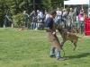 addestramento-cani-open-day-2012-52